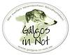 Galgos in Not